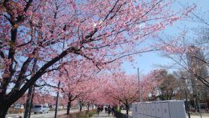 Sakura_1903241