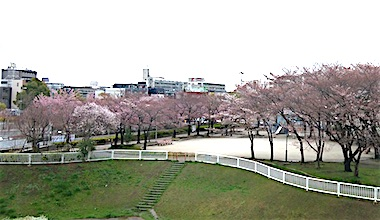 Kawagutimotogou_sakura1803