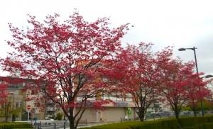 Hanamizuki_2004191