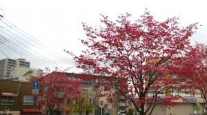 Hanamizuki_2004192