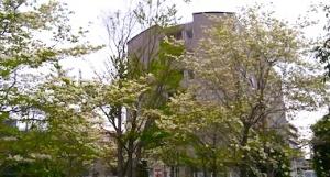 Hanamizuki_2004193