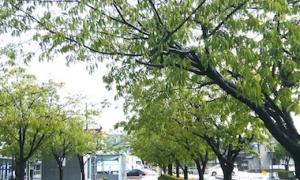 Kawagutimotogou_191022_2