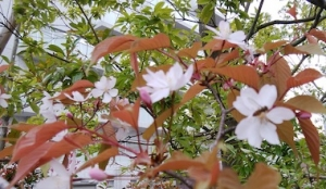Kinjo_2003281