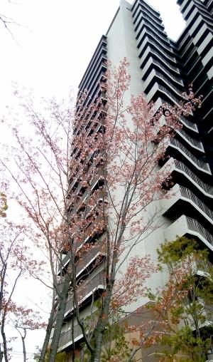 Kinjo_2003286
