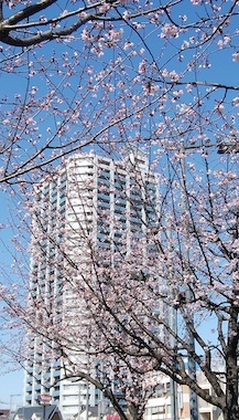 Sakura2_200223