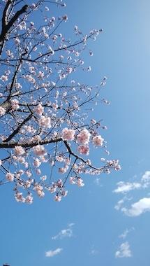 Sakura3_200223